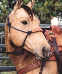Nylon halter with lead and tooled noseband by Martin Saddlery
